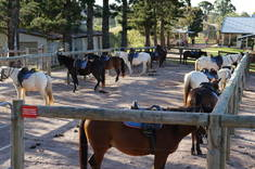 Summer Horse Riding Camps for Kids Beenaam Valley Horse & Pony Riding Venues 3